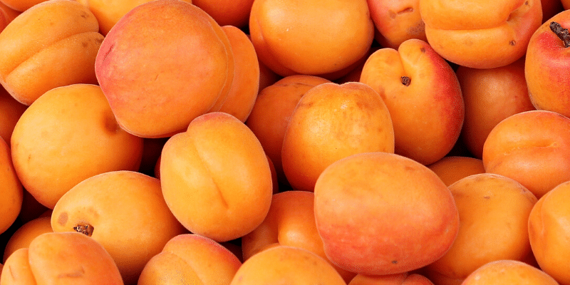 Saftige og flotte abrikoser i orange farver