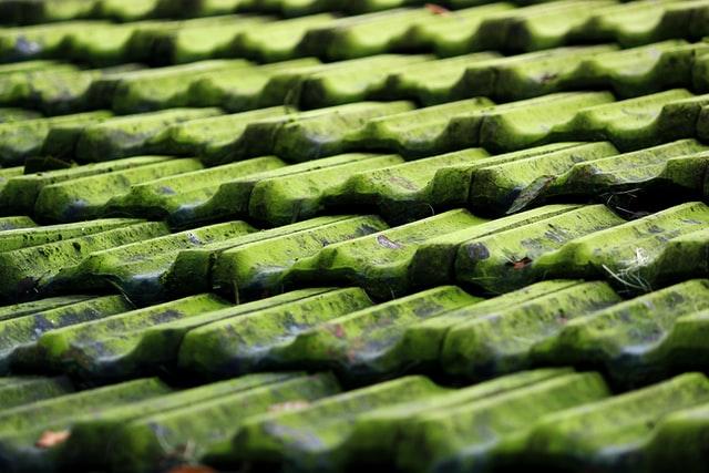 Få en algebehandling og slip af med alger